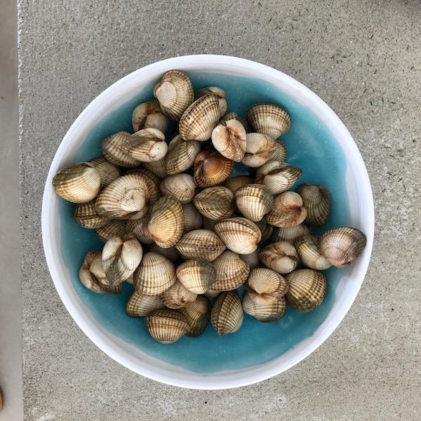 bowl ana deman annette van ryhsen vendee